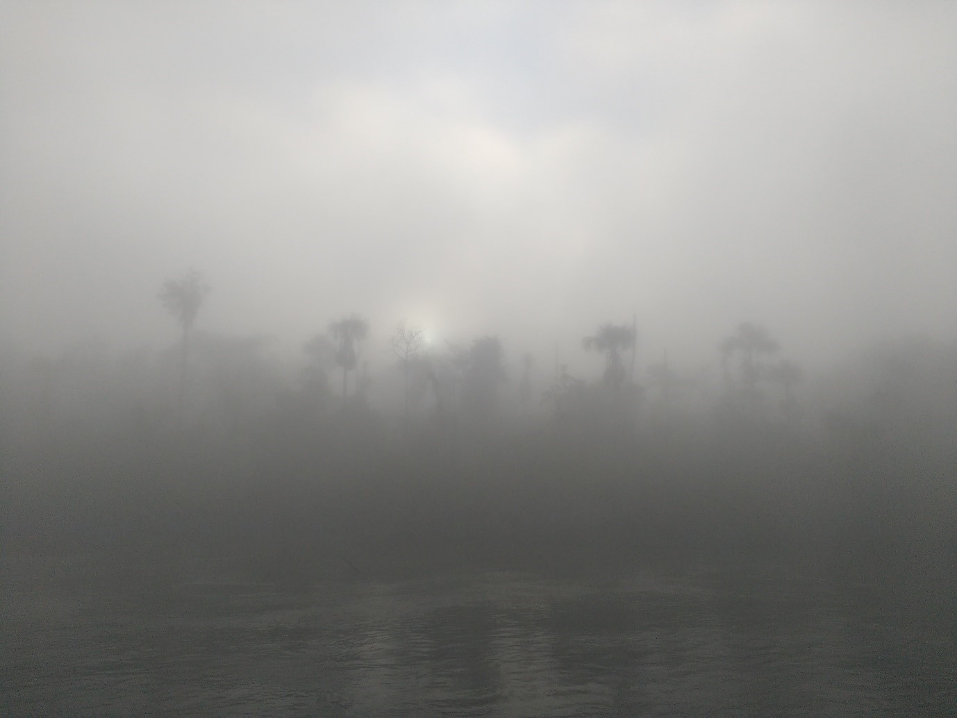 amazon river, mist, morning